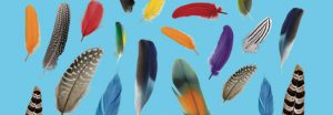 """Concours autocollants Toupie """"oiseau multicolore"""""""